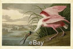 No321 Roseate Spoonbill Audubon Print Repro Havell Edition Double Elephant Folio